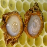 Royal jelly thumbnail