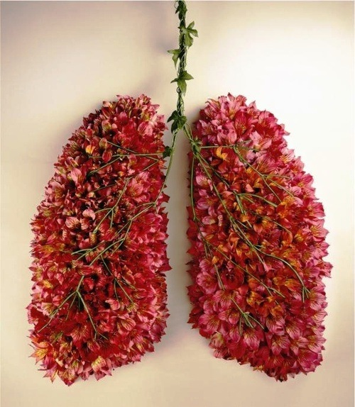 Cystic fibrosis flower lungs