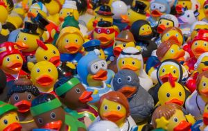 Phthalates toy ducks
